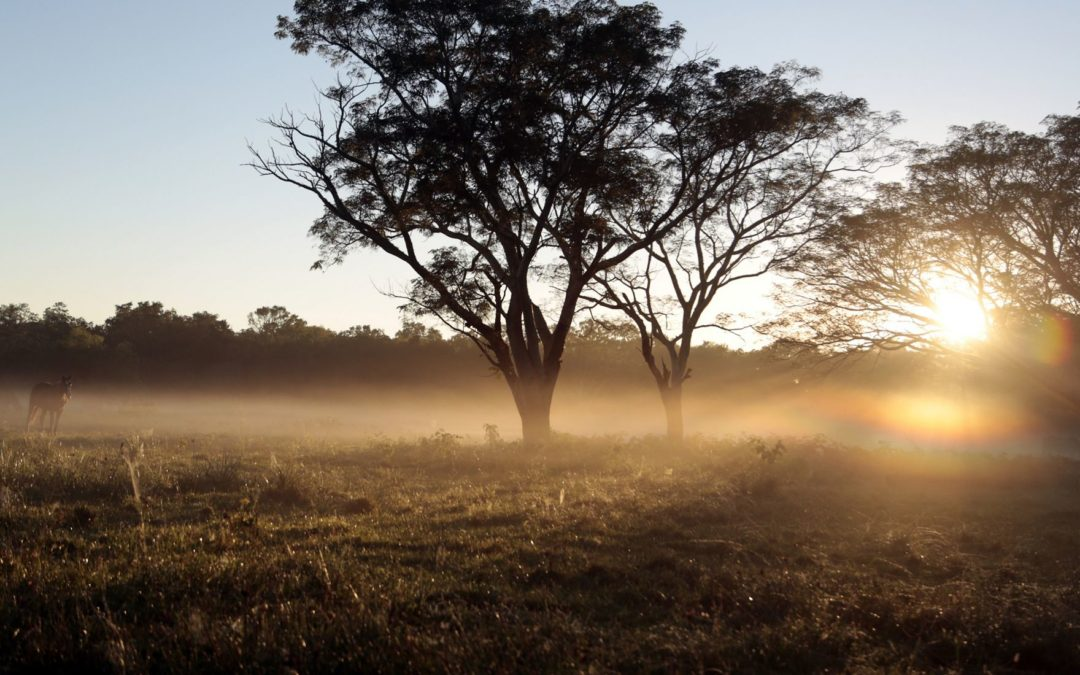 Plan Estratégico De Turismo Sustentable, Provincia Del Chaco