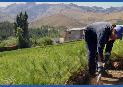 Estudio de mercado de Turismo Rural en Argentina