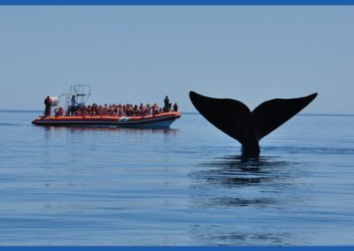 Impacto Económico del Turismo en Puerto Madryn